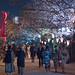 Sumida Sakura Festival - Tokyo, Japan