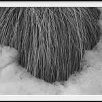 grass and snow thumbnail