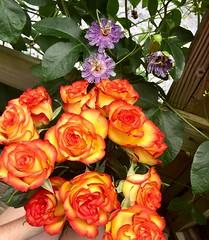 Roses & passionflowers (saiberiac) Tags: plant garden vine passiflora passionflower bouquet roses rose flowers