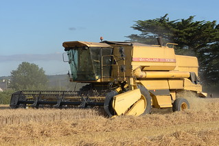 New Holland TX36 Combine Harvester cutting Winter Wheat