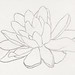 Flower, possibly a water lily (1894) by Julie de Graag (1877-1924). Original from the Rijks Museum. Digitally enhanced by rawpixel.