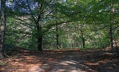In the woods... (♥ Annieta ) Tags: annieta september 2018 sony a6000 nederland netherlands drente zorgvlied wood bos bomen licht light allrightsreserved usingthispicturewithoutpermissionisillegal