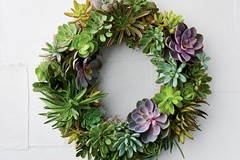 How to Make a Succulent Wreath With Real, Living Plants (katalaynet) Tags: follow happy me fun photooftheday beautiful love friends