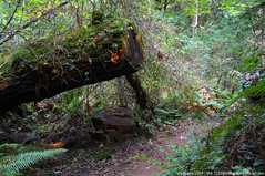 2018-08-18 Whistle Lake Trail 205 (15) (1024x680) (-jon) Tags: anacortes skagitcounty skagit fidalgoisland sanjuanislands washingtonstate washington pnw pacificnorthwest salishsea pugetsound acfl anacortescommunityforestlands whistlelake lake trail path 205 nikon nikonl22 tree douglasfir fern alder summer woods forest a266122photographyproduction hiking hike walk walking