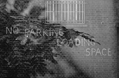 No parking (lharris35mm) Tags: analogue slr 35mm blackandwhite doubleexposure noparking ferns
