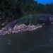 After midnight at Cumberland Falls