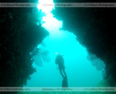 Scuba (ficktionphotography) Tags: aquatic coral diver diving fiji life scuba scubadiver underwater swimthrough scubadiving