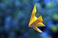 Angelfish (Takuro Kashiwamura) (De Rode Olifant) Tags: origami fish origamifish angelfish takurokashiwamura origamiangelfish paper paperart papiroflexia 3d diagrams czechorigamiconvention2012 cof036gloq cof0361elf cof036mari cof036hole cof036dmnq cof036anke cof036mchi cof036uki cof036biz cof036ally