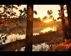 embrace the change (Gordon Hunter) Tags: morning am sunrise sun glow warm trees leaves leaf forest water reflection nanaimo river bc canada gordon hunter nature country rural estuary fog steam mist orange nikon d5000 october