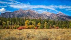 The Layers of Autumn (buffdawgus) Tags: autumn westernstatesroadtrip landscape rockymountains lightroom6 grandtetonnationalpark topazstudio canonef24105mmf4lisusm fall canon5dmarkiii wyoming