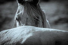 I'v got your back (Stickyemu) Tags: animal horse blackandwhite bw eye pet nikond500 nikon200500mmf56 splittone