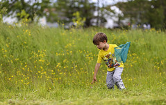 Flowers or Butterflies (Danny VB) Tags: net capture outside gazon fleurs flowers yellow jaune play playing jeu jouer canon garçon boy kids enfant champ summer été july juillet 6d canon6d