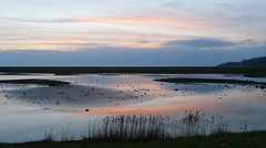 Leighton Moss RSPB Reserve (Niall Corbet) Tags: rspb leightonmoss dusk sunset wetland