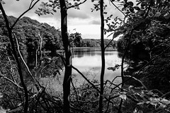 53/100x (eskayfoto) Tags: canon eos 700d t5i rebel canon700d canoneos700d rebelt5i canonrebelt5i monochrome mono bw blackandwhite 100x 100xthe2018edition 100x2018 lightroom image53100 sk201806171258editlr sk201806171258 chellowdene reservoir lake pond water tree trees yorkshire allerton sandylane bradford westyorkshire chellowdenereservoir chellowdenereservoirs