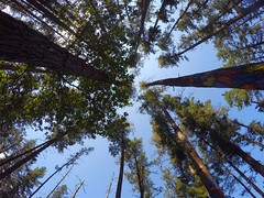#GoPro and #nature in bosque de Oma (ludo.bigazzi) Tags: gopro nature