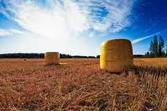 Yellow Bales On The Early Autumn Fields (k009034) Tags: 500px yellow copy space finland scandinavia tranquil scene agriculture bale clouds color crop farm farming fields gold harvest nature no people plastic roll sky summer trees wrap teamcanon copyspace tranquilscene fieldsofgold nopeople