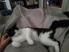 20180818_070839 (sobca) Tags: cat kottur kitte eesa miu kat pussi kato chat katze popoki gatto chatool billi felis cattus gato katt meo кошка बिल्ली 猫 γάτα vighro ᏪᏌחתול