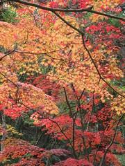 a (33) (hiromi89) Tags: japan beauty beautiful scenery flower wood pond
