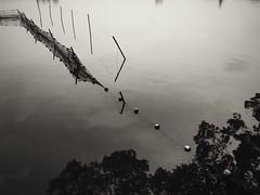 Net, Xuanwu Lake (chinese johnny) Tags: chinese china nanjing jiangsu urbanchina photographsofchina streetphotography documentaryphotography documentary bw blackandwhite monochrome moody melancholy iphone iphoneonly iphone5c reallifenotposed ambient xuanwu lake citywalls traveler sky landscape tree water reflection