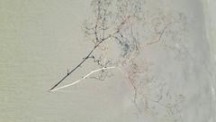 Minimalism 01 (rimasjank) Tags: minimalist shadow beach sea baltic