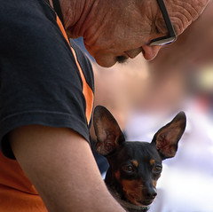 A Dog and His Man (Krbo_sb) Tags: dog pet pinscher