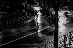 20180823 typhoon is approaching (soyokazeojisan) Tags: japan osaka street bw typhoon rain city people blackandwhite light digital olympus em1markⅱ  12100mm 2018