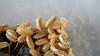 "Porcellio laevis ""albino"" (Awavi) Tags: isopod armadillidium porcellio pillbug woodlice albino ダンゴムシ ワラジムシ"