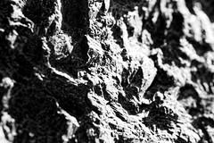 Chinese (Peking) granite (Pascal Volk) Tags: berlin friedrichshain fhain platzdervereintennationen findlingbrunnen chinesegranite chinesischergranit granitochino berlinfriedrichshainkreuzberg artinbw schwarz weis black white blackandwhite schwarzweis sw bw bnw blancoynegro blanconegro macro makro 147mm closeup nahaufnahme macrodreams bokeh dof depthoffield herbst fall autumn otoño canoneos6d sigma105mmf28exdgoshsmmacro sigmaapoteleconverter14xexdg manfrotto mt055xpro3 468mgrc2 dxophotolab rock stein stone