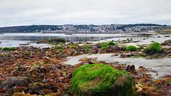 Moszatos partok apály idején (Penzance, Anglia) (milankalman) Tags: sea beach tide alga landscape nature city
