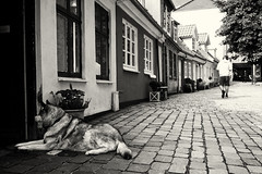 Vor Frue (Muao) Tags: street streetphotography monochrome monochrom noir blackandwhite canon 5dii 5dmk2 aalborg denmark