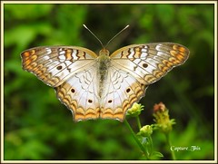 Colorful Moth (todd5524) Tags: moth outdoors nature life nikon photography photoshop colors patterns splendid capture