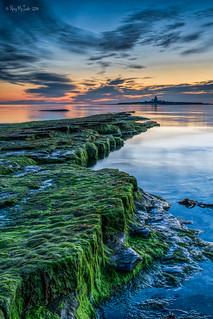 DSC01563- Seaweed Sunrise