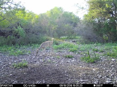 2018-09-19 19:00:20 - Crystal Creek 1 (Crystal Creek Bowhunting) Tags: crystal creek bowhunting trail cam