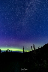 Underneath an autumn sky (spwasilla) Tags: night aurora auroraborealis northernlights milkyway stars sky skies trees nightphotography