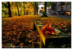 Autumn teaches us to let go of what is now not required (awardphotography73) Tags: sunlight colours roathpark cardiff leaves wales autumn
