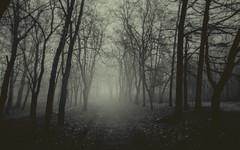 foggy_alley_by_eredel-d8a5dxu (tanyapavlicapschyrembel) Tags: