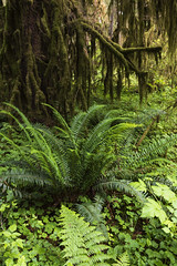 Do not call the forest that shelters you a jungle… (ferpectshotz) Tags: rainforest temperaterainforest hohriver olympicpeninsula pacificocean pacificnorthwest hike trail cold summer water sky washington usa landscape nature olympicnationalpark pnw nw hallofmosses fern moss trees