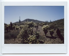 Nevada & Arizona 2018020 (Past Our Means) Tags: arizona desert fujifilm fuji instax instant instaxwide indie cactus plants dirt film filmphotography filmisnotdead filmsnotdead nofilter travel adventures wanderlust hiking analog analogue instantcamera instantphotography instantwide polaroid summer 2018 mountain sky tree adventure wide 210 grass rock soil rocks myphotography