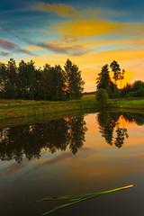 golden hour (bożenabożena) Tags: landscape forest tree sunset water lake sky clouds krajobraz zachódsłońca drzewa jezioro woda niebo chmury canon waterreflection