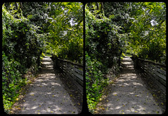 On The Path (Stereo) (tombentz33) Tags: stereo stereoscopic 3d stereoframes summer