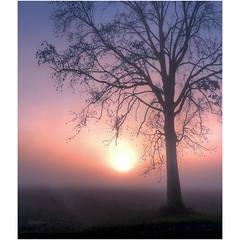 The uncertainty principle (Robyn Hooz) Tags: albero tree nebbia fog sunset tramonto campo uncertainty incertezza vista horizon view rami branches line sight orange