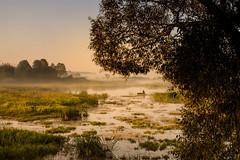 Solitude No. 1 (Marcin eM.) Tags: ilce7 sonyalpha7 sonya7 pentacon50mmf18 fisherman landscape sunrise nature river