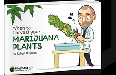 when-harvest-weed-plants-1 (Watcher1999) Tags: free mini giude cannabis report when harvest marijuana seeds california medical growing bob marley weed weeds smoking kush buds big bud great ganja legalize it reggae information