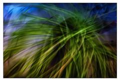 Photosynthese (wolfiwolf) Tags: wolfiart wolfiwolf wolf photosynthese quantensuppe universe eneamaemü jazzinbaggies fuddler zweibutlerhabeich ichduftewieeinspekulazius ichzeige meditation meditiert studie science wissenschaft green blue nature plant nurfüreuch inechtzeit jetztistes habtihresgesehen gewahrwerden wahrekunst leben beispiellos meilenstein einstein vonanbeginnzuanbeginn alphaetomega