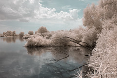 Altmühl River - Golden Infrared (gporada) Tags: infrared golden mittelfranken bavaria germany nikon d40 altmühlriver vivid dreamy surreal contrasty experiment