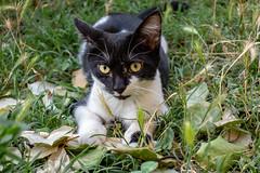 Franck-Barske-08078.jpg (franck_barske) Tags: vacances france concepts verspontdugard chat compagnie mignon languedocroussillon voyages animaux gard