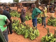 banane (diario di un missionario) Tags: missione costadavorio