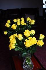 DSC_1568 (PeaTJay) Tags: nikond750 sigma reading lowerearley berkshire macro micro closeups gardens indoors nature flora fauna plants flowers bouquet rose roses rosebuds