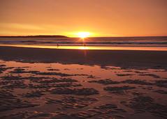 A magical swim (Patricia McAtee - Photos of Maine) Tags: sea seagulls beachbirds sunrise swimming lowtide waves beachwalk morning morningwalk oldorchardbeachmaine