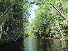 a canal between lakes (VERUSHKA4) Tags: canal lake way canon russia europe solovetskyarchipelago island nord northerneurope verdure nature summer boat summertime travel july bolshoysolovetsky arkhangelskyregion greens greenery trunk forest light bough branch